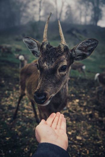 Love this one One Animal Hand Human Hand Mammal Human Body Part People Focus On Foreground Day Vertebrate Close-up Unrecognizable Person Real People Deer Animal Wildlife Outdoors Herbivorous Domestic Animals Animals In The Wild Finger