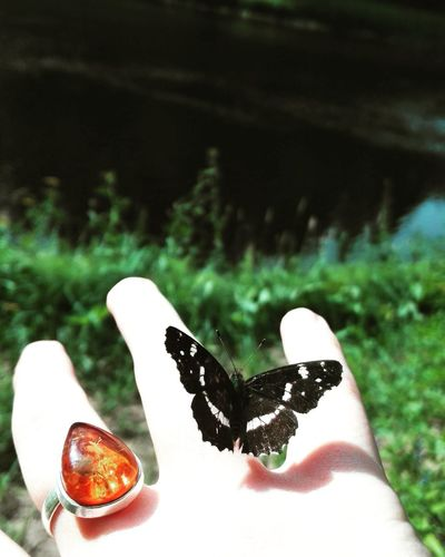 Memories with wings from summer. Summer Butterfly Ring Natue Peace Untouchedbeauty Outdoors Peace ✌