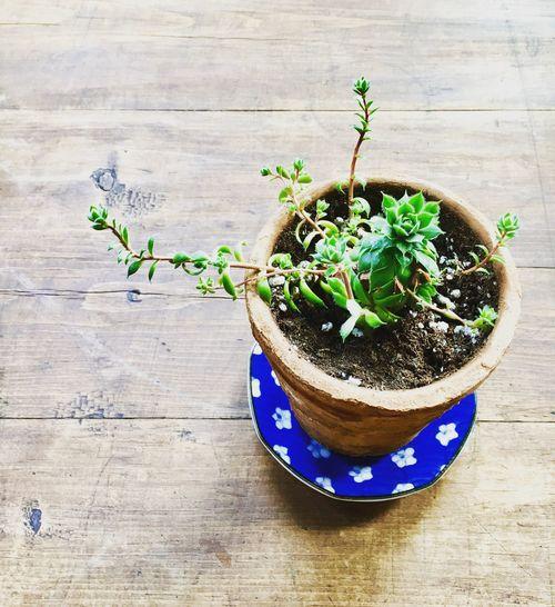 Plant High
