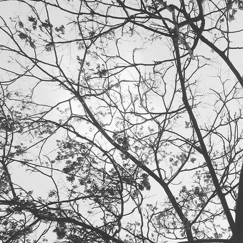 Tree Branches Sky Clouds Bw Blackandwhite Fall Atumn Winter Cold پاییز زمستان  سرد سرما درخت شاخه تنهایی