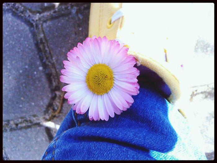 Uwielbiam Trampki Flower