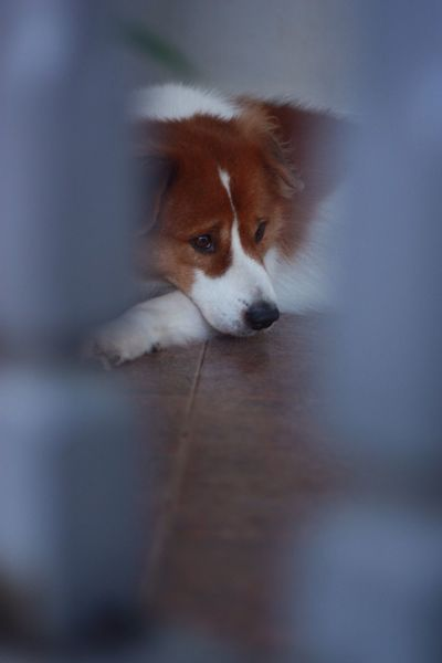 I Love My Dog mybruno.