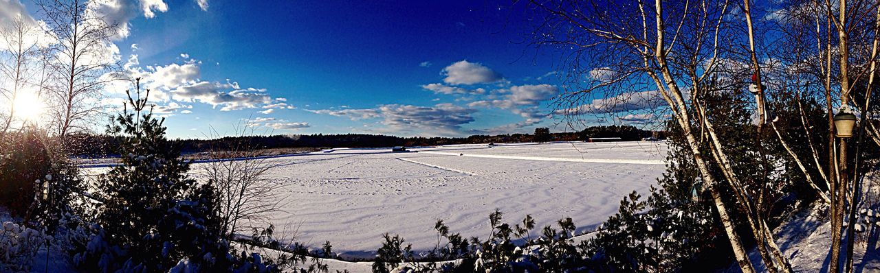 The view from my backyard Landscape Cranberry Bog Outdoors Winter Wonderland Duxbury, Ma Panoramic Panoramic Photography No People Tranquility Landscape_Collection Scenics Beauty In Nature