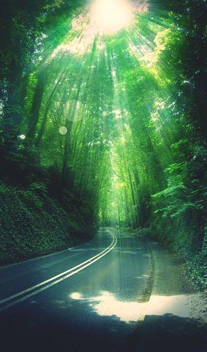 Creation of GOD.... Light Forest Light Of Forest
