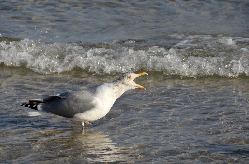 Side view of seagull on beach