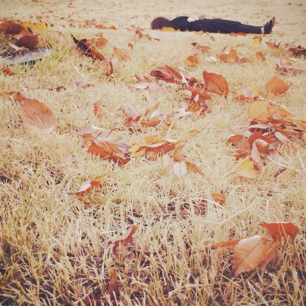 가을 바닥 눕기 Fall 낙엽 Streetphotography CreativePhotographer