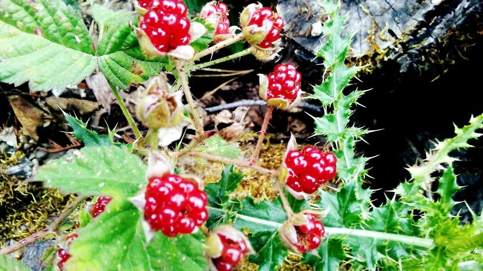 Check This Out Raspberries Springtime Enjoying Life Heavenly On My Walk Today I TookThis Picture!!! Nature Love ♥ Gods Art The Great Outdoors - 2016 EyeEm Awards Spring Colors Of Nature Pure Beauty♡♥♡ Field Trip Relaxing