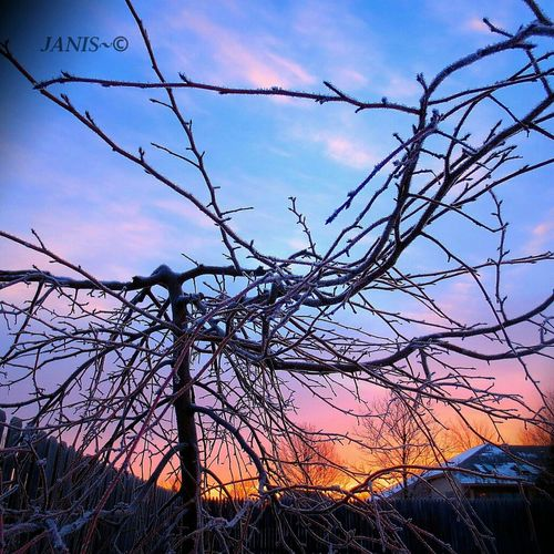 Frosty branches during sunrise. EyeEm Nature Sunrise Good Morning Winter Frost #sunset #sun #clouds #skylovers #sky #nature #beautifulinnature #naturalbeauty #photography #landscape Sky_collection Nature_collection Eye4photography  Ee_daily EE_Daily: Orange Tuesday