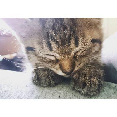 Kitten Cat Kitty Love cute pet animal adorable baby