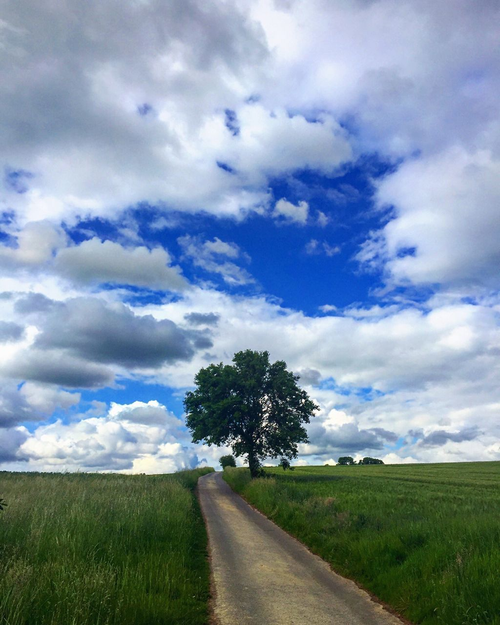 grass, tranquil scene, road, the way forward, landscape, field, cloud - sky, sky, nature, tranquility, scenics, tree, diminishing perspective, day, beauty in nature, no people, growth, transportation, outdoors, rural scene