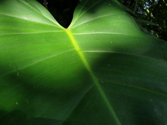 life leaf Leaf