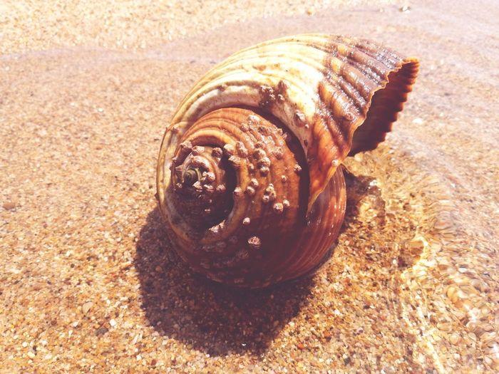 Sea Life Sand