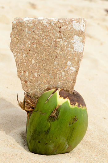 Bay Of Pigs Cuba Beach Close-up Day Food Food And Drink Freshness Girón Green Color Healthy Eating Nature No People Outdoors