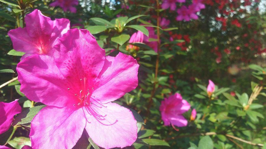 """""""Until spring""""🌸🙏 Flower Beauty Until Spring"""