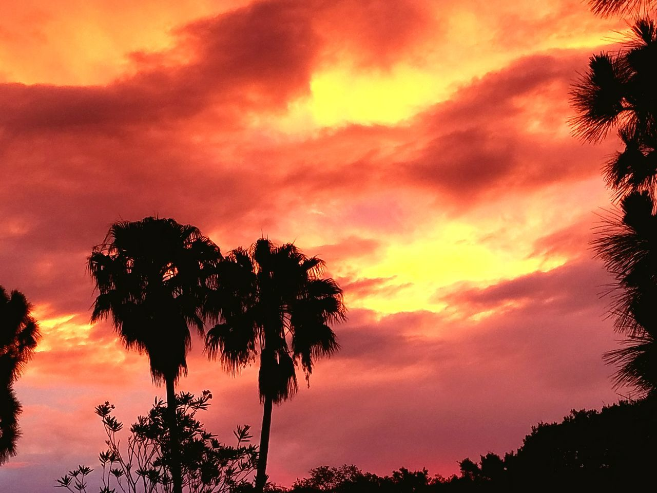 tree, sunset, sky, beauty in nature, palm tree, scenics, nature, silhouette, cloud - sky, tranquility, orange color, tranquil scene, low angle view, no people, dramatic sky, growth, outdoors, tree trunk, day