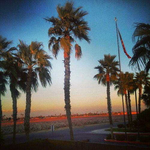 Palmtreesinphx Ipledgeallegiancetotheflag Nicedays Desertlivin Citylife Blueskies