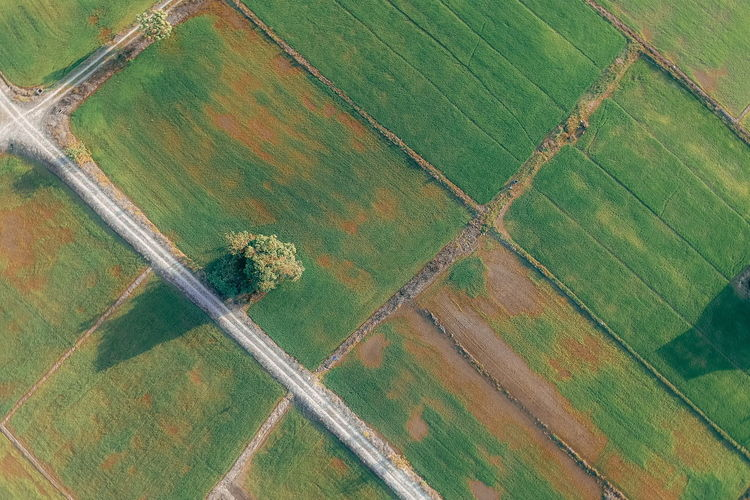 Landscape Aerial View Rural Scene Field Environment Agriculture Farm Land Scenics - Nature Tranquil Scene Patchwork Landscape Green Color Day Beauty In Nature No People Tranquility Nature Growth Pattern Full Frame Outdoors Plantation Above