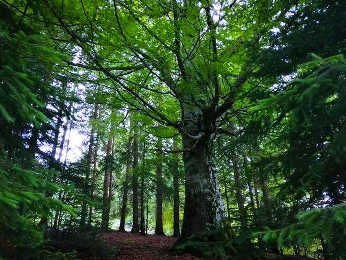 Tree Tree Area