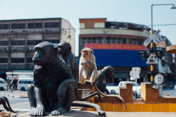 Alive  Monkeys Pretending RealOrFake? Thailand Travel Waiting Animal Themes Animals Architecture Building Exterior Confused Confusing Fake Faking Hiding From The World Illusion Lopburi Mammal Monkey Business Samesamebutdifferent Sculptures Similarity Statues Wild Animals