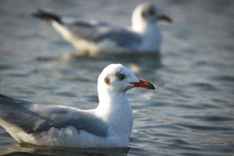 Close-up of seagull on sea shore