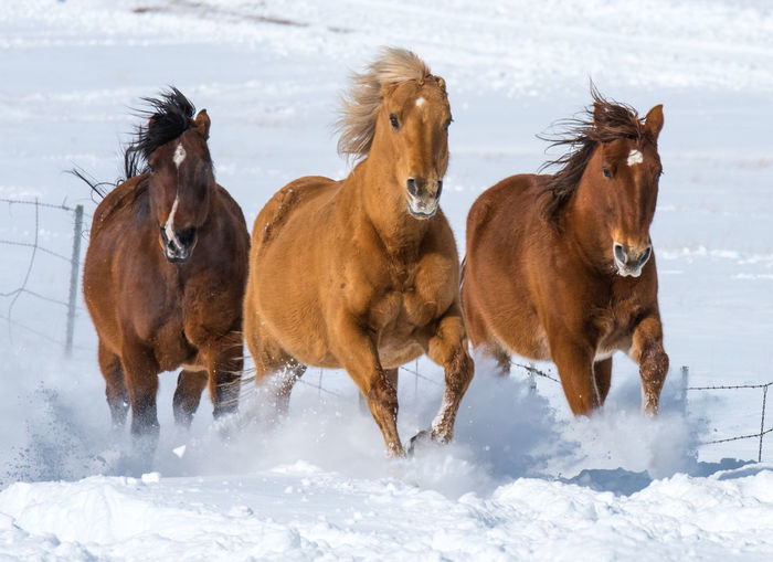 Feb 2019 -Music Meadows Ranch Colorado Herd Of Horses Group Of Animals Cold Temperature Snow Domestic Winter Domestic Animals Livestock Animal Themes No People Outdoors Herbivorous Day Brown Land Field Horse Mane Nature Mammal Vertebrate Animal Wildlife Wind Blown Hair