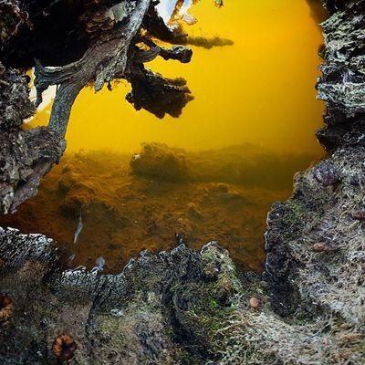 Photo Photooftheday Pics Amazing Beautiful Water Backwater Hodmezovasarhely Hungary Fish Boat Deadtree Yelow Cave Mistery 🐟🐠🐡🐙