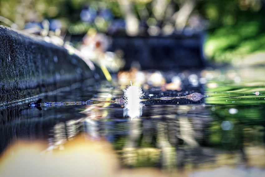 ..just a Feather on the water Autumn depth of field Bokeh Photography Surreal Dreamcatcher Calmness Park - Man Made Space On The Water Feather  Water Selective Focus Close-up Drop Day Nature Wet Focus On Foreground No People Outdoors Reflection Surface Level City