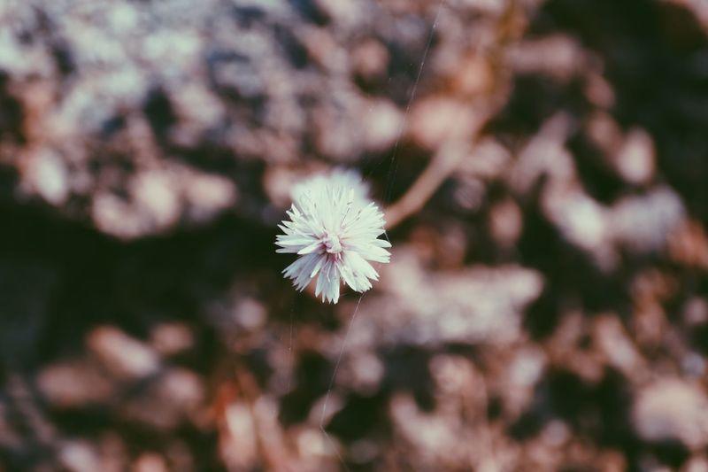Close-up of fresh flower