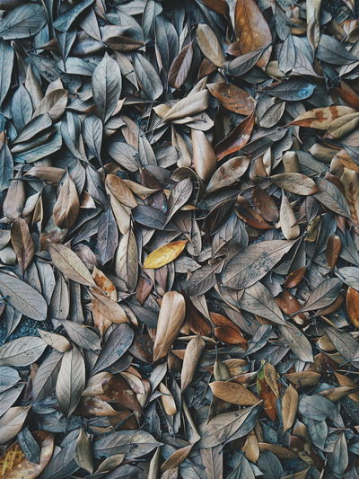 Full frame shot of leaves