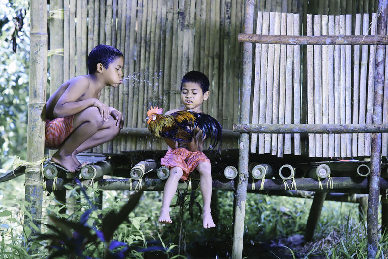Boys playing with rooster while sitting on wood
