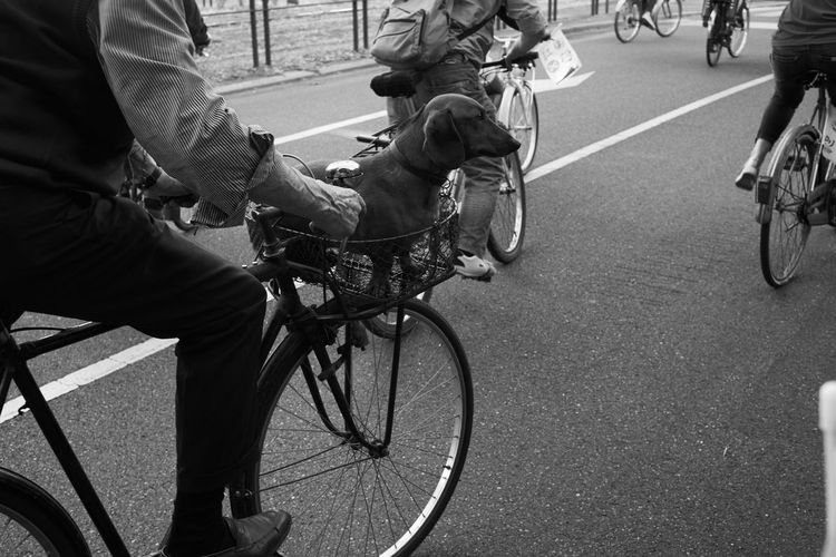 CyclingUnites Bicycle Cycling Street Dog Pet Adult Men Adults Only Human Hand Outdoors Day Streetphotography Street Photography Streetphoto_bw Blackandwhite Black And White Black & White Embrace Urban Life My Year My View