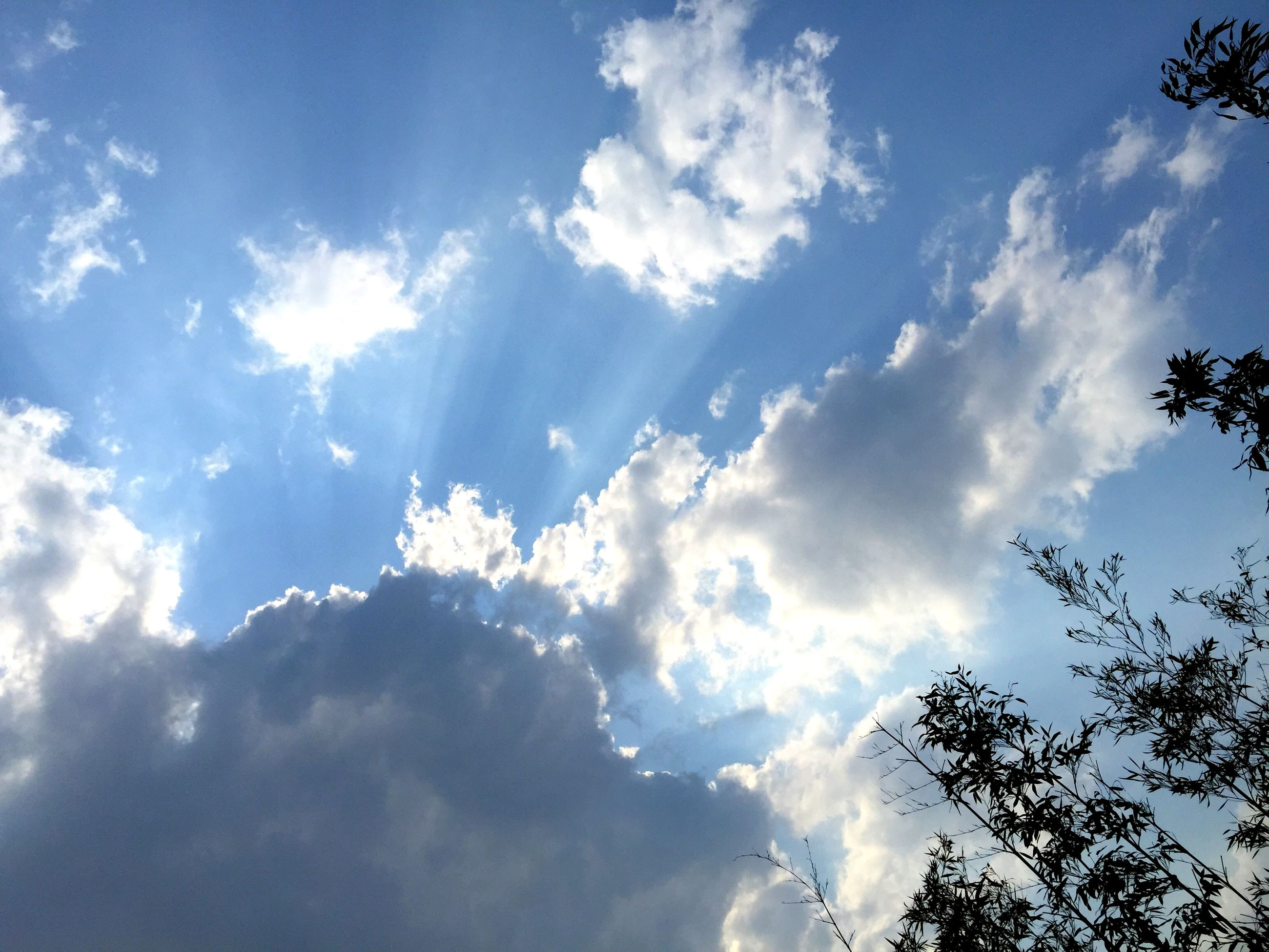 low angle view, sky, tree, cloud - sky, beauty in nature, tranquility, blue, nature, scenics, cloud, cloudy, tranquil scene, sunlight, sunbeam, growth, day, outdoors, no people, silhouette, idyllic