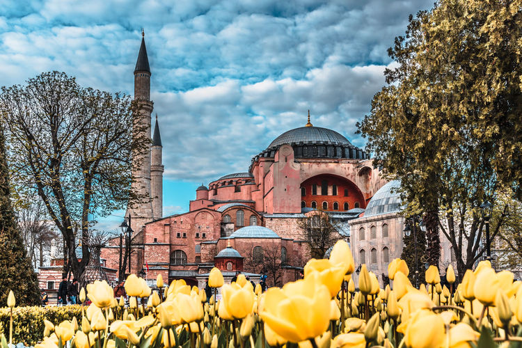 Architecture Blue Built City Cityscape Constantinople Culture Destinations Festival Flower Hagia Historic Historical Islam Islamic Istanbul Minaret Mosque Museum Muslim Ottoman Religion Sky Sophia Square Street Tourism Touristic Traditional Travel Tulip Turkey Turkish
