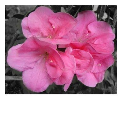Pink Naturelovers WeLoveNature  Flowerlovers Floral_lover Flowers Nature Flower Flora