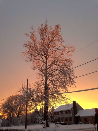 February Sunset_collection Streamzoofamily Winter In New England Tree_collection  Tree February 2016