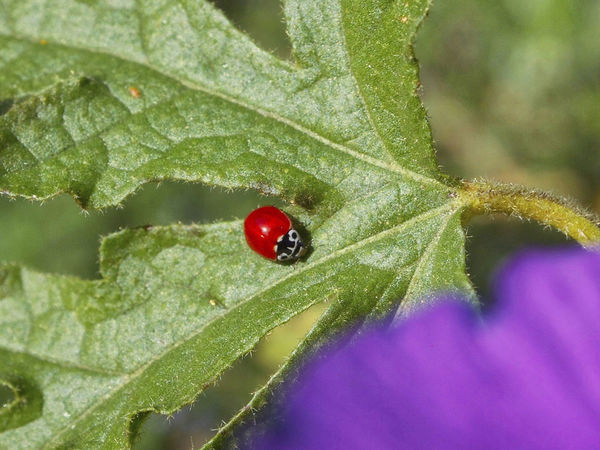 Close-up Day Green Color Insect Ladybug Leaf Outdoors Plant Part Red Selective Focus