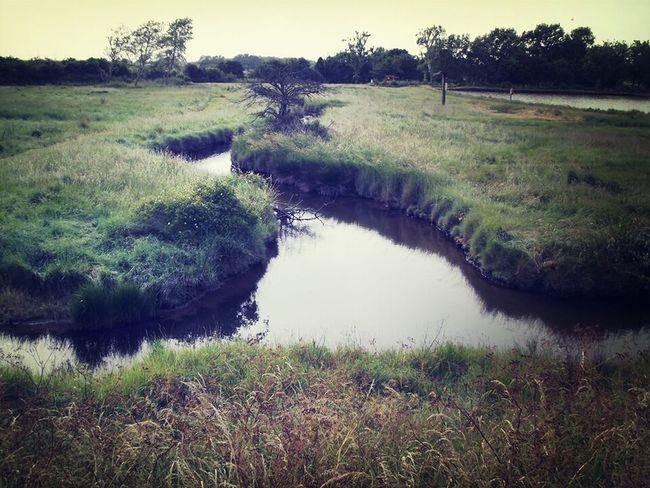 Taking Photos Nature Scenery Stream