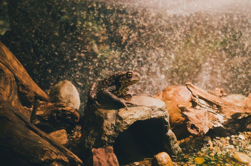View of lizard on rock