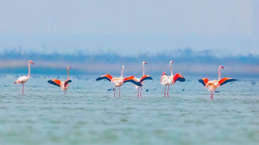 Flock of birds on the sea