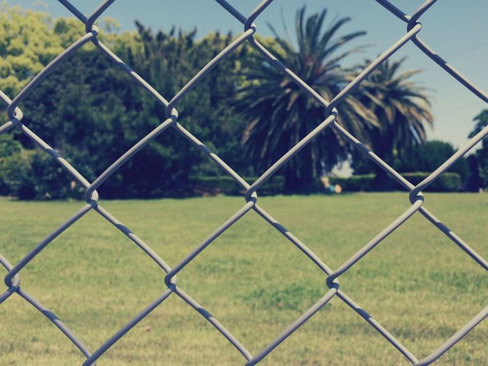 Chainlink fence on grassy field