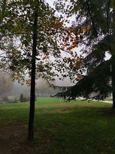 Trees on field