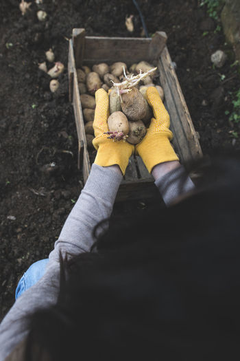 Potatoes Potatoes Field Potatoe Planting Planting Seeds Seeds Garden Bio Organic Organic Farm Hand Handmade Authentic Toy Stuffed Toy Teddy Bear One Person Representation Childhood Holding Day Real People Lifestyles Leisure Activity High Angle View Human Hand Human Body Part Outdoors Unrecognizable Person Glove Softness