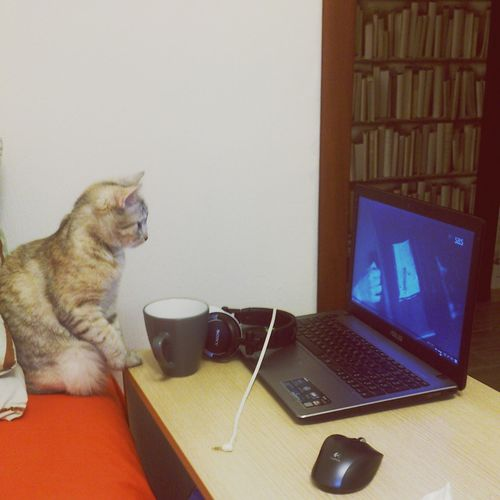 :-) Cat Cat♡ Cat Lovers
