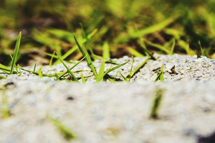 Close-up of moss on grass