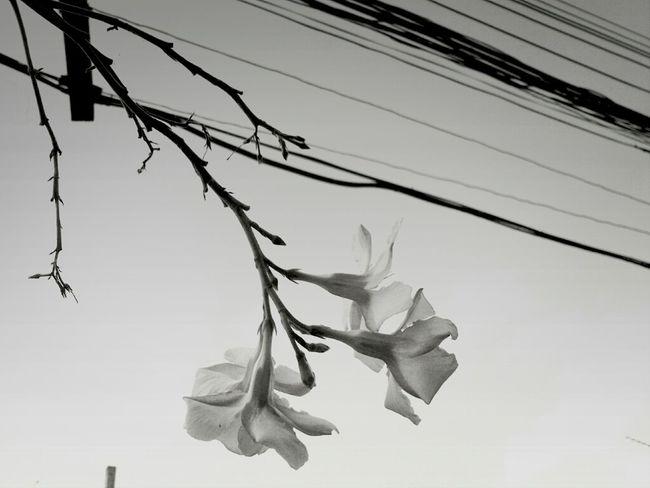 Flowers Blackandwhite Monochrome Monoart Thailand_allshots