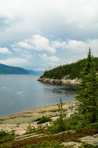 Nature Quebec Tadoussac, Canada Beauty In Nature Canada Canada Coast To Coast Cloud - Sky Day Grass Lake Landscape Mountain Nature Nature Lover No People Outdoors Scenics Sea Sky St Lawrence River Tadoussac Tranquil Scene Tranquility Tree Water Waterfront