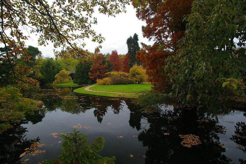 autumn in arboretum Autumn Colors Water Reflections Arboretum Beauty In Nature Leaf No People Tree Water