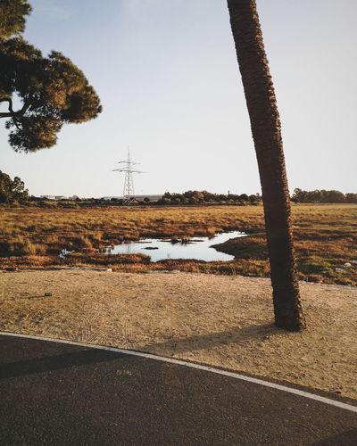That sunset light 🌅 EyeEm Selects Tree Sky Tranquil Scene Coast Calm Non-urban Scene Tranquility