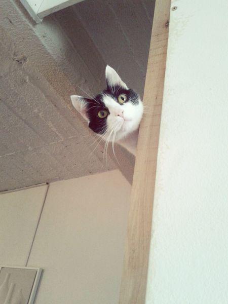 Cat Cat Lovers Cats Cats 🐱 Gatos Gatita Linda Gatita  Linda 💜 Sorprise Sorpresa Altura chuna