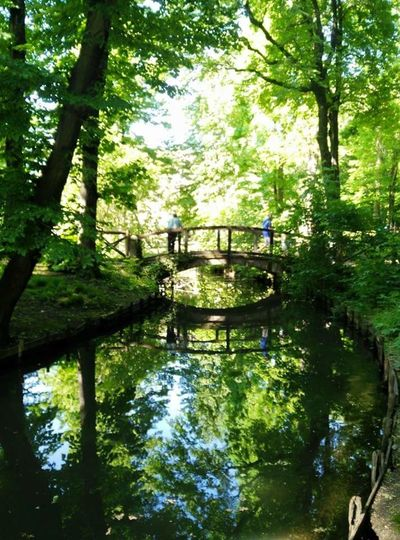 Tree Nature Tranquility Water Beauty In Nature Green Color Growth Outdoors Tranquil Scene Lush Foliage Forest Day Reflection River Scenics Branch Footbridge No People Beauty Parco Sempione Milano